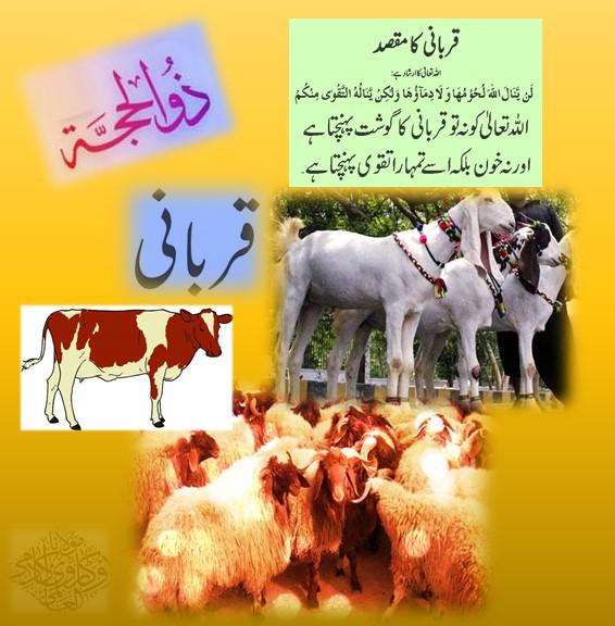 Qurbani- The Method Of Sacrifice- Qurbaani in Urdu -Allamah Kaukab Noorani Okarvi